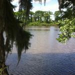 river-n-trees